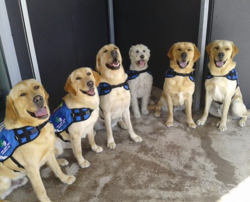 tax relief assistance dogs